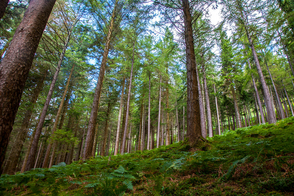 Wicklow Mountains National Park.<br /> August 15, 2014
